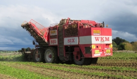 walling-contracting-services-gallery-fodder-beet-5