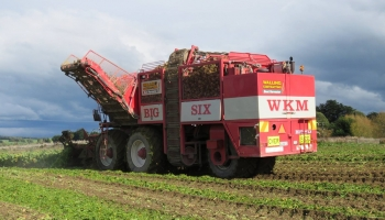 walling-contracting-services-gallery-fodder-beet-7